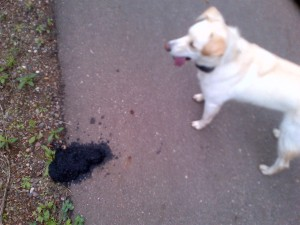 Dog and bear poop