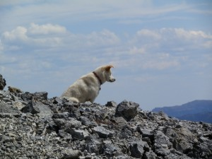 On Summit Mountain