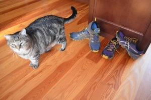 Cat and Asics Trail Shoes