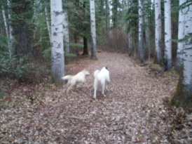 Two dogs running