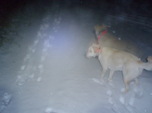 white dog in the dark