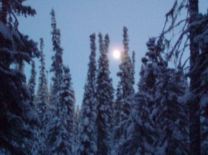 full moon and trees