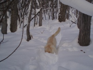 dog on a winter trail