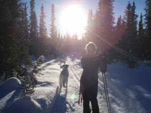 ski trails and dogs