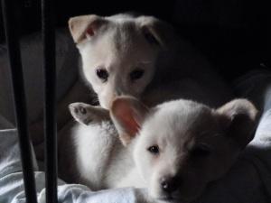 2 puppies sleeping