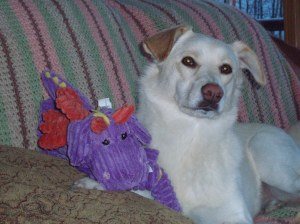 dog and a purple dog toy