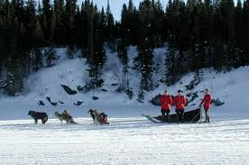 RCMP and sled dogs