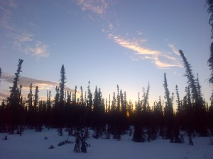 sunset and black spruce