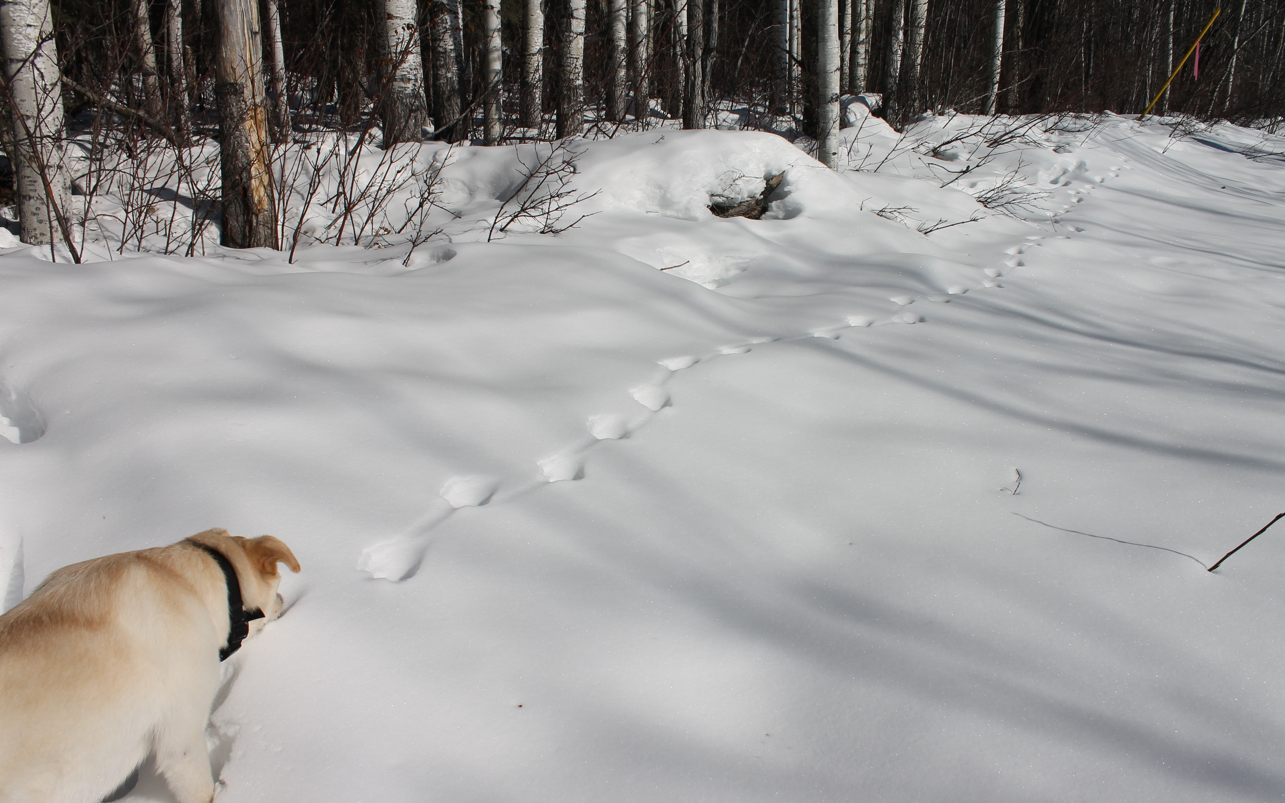 Snow prints outdoor running adventures dog smelling tracks publicscrutiny Choice Image
