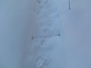 mouse snow tracks