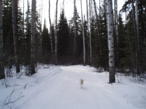winter running trails
