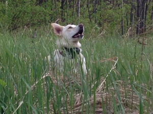 dog and grass