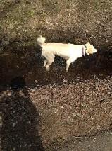 water dog