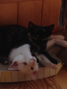 white and black kittens