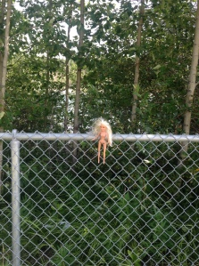 creepy barbie was stuck in the fence along the trail
