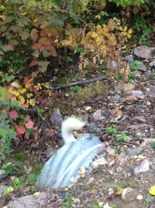 dog tail and culvert