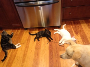 3 cats 1 dog