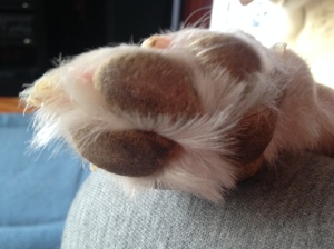 dog toes