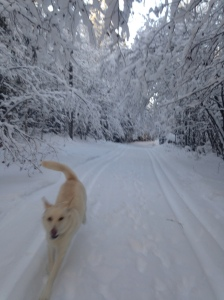 dog and winter runner
