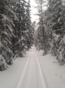 trail in the winter