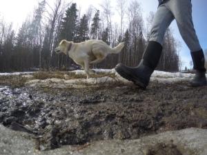 mud and dog walking