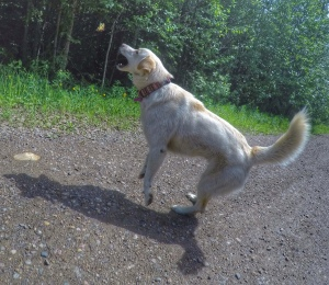 dog chasing butterflies