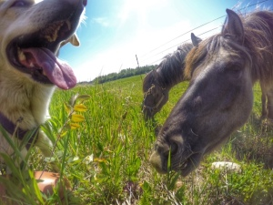 dog and horses
