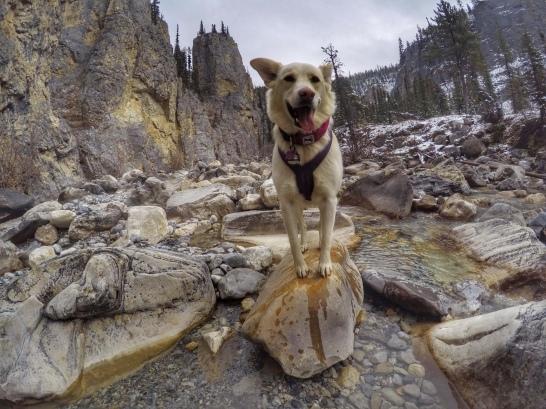 Kobi in the mountains